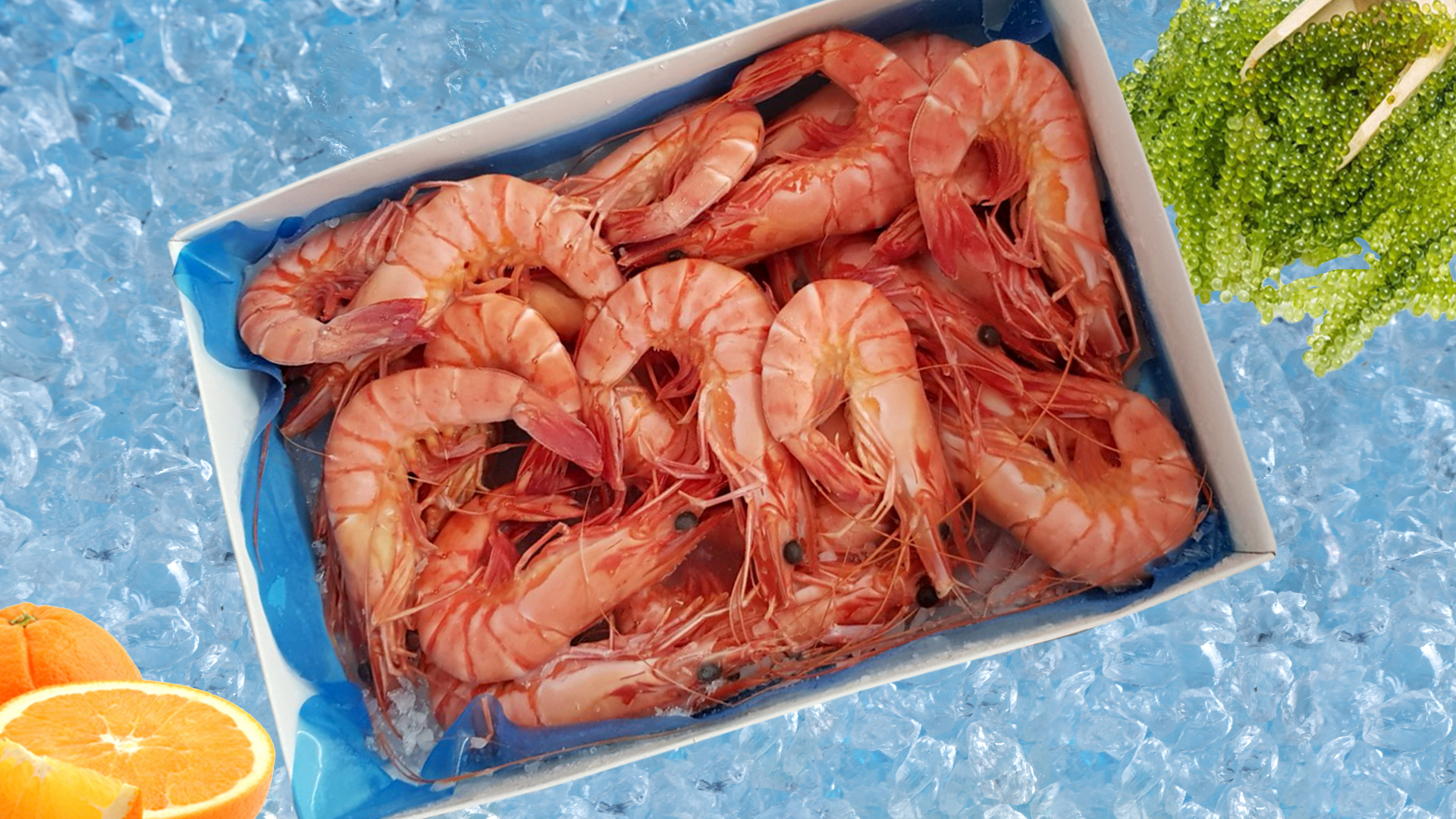 COOKED HEAD-ON-SHELL-ON NATURAL BLACK TIGER SHRIMP