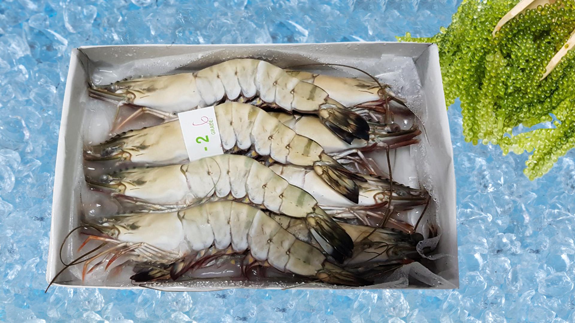 原条冷冻黑虎虾