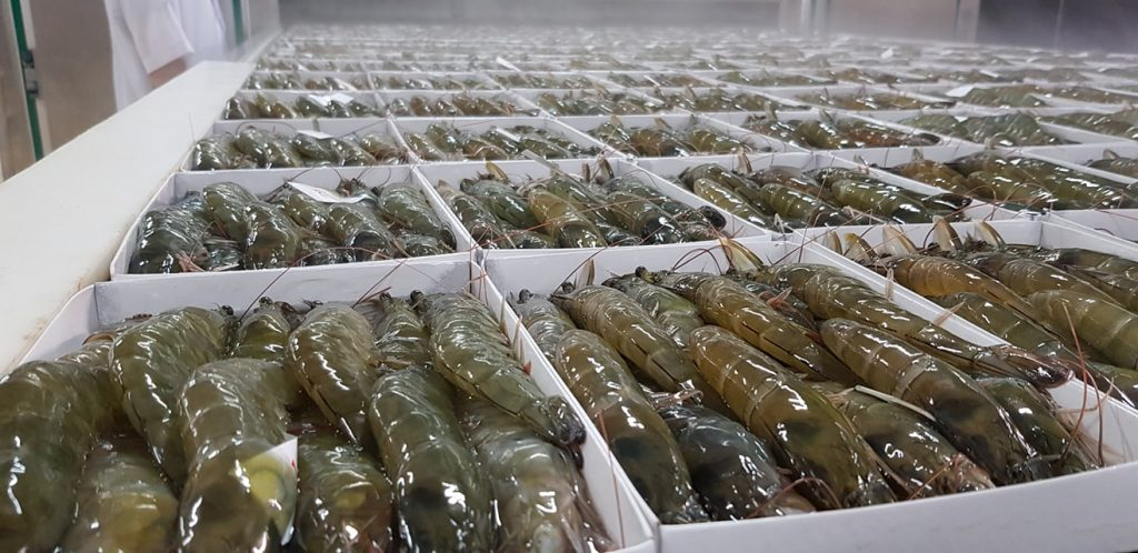 EXPORTING SHRIMP TO USA AND CHINESE CUSTOMS